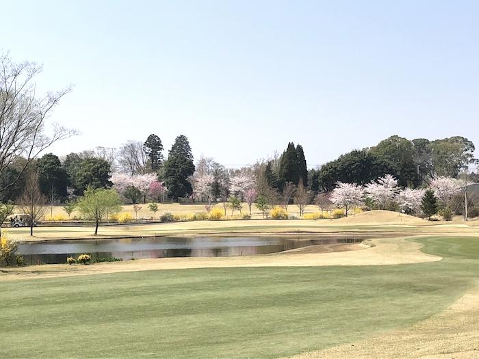 お花見ゴルフ2018-1
